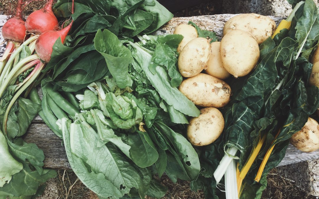 The Allotment Diaries: 2019