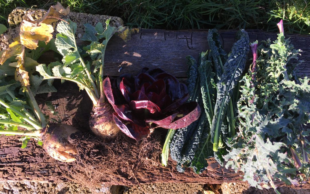 The Allotment Diaries: January